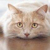 Comment le monde est perçu par nos amis les chats ?