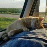 Un camionneur sauve un chat roux et en fait un co-pilote idéal