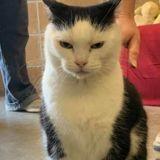 Le pire chat au monde : Ce chat au sale caractère a eu droit à une annonce d'adoption pas comme les autres
