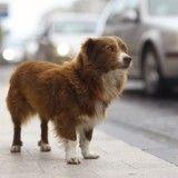 Comment éviter de perdre mon chien?