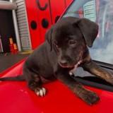 Un adorable chiot abandonné a été adopté par des sapeurs-pompiers en Seine-et-Marne