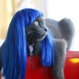 Les perruques pour chat