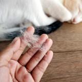 Mon chat perd trop de poils, est-ce normal ?