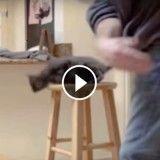 Un chat battu par son maître, la vidéo choc de la PETA pour dénoncer les cirques