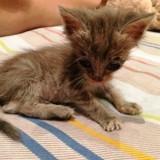 Couvert de fourmis, ce chat avait besoin d'un miracle pour survivre