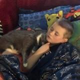 Ce chat vient en aide à un petit garçon handicapé en pleine crise de larmes (Vidéo)