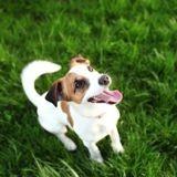 240 parlementaires publient une tribune au sujet des abandons d'animaux de compagnie en France