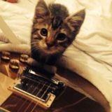 Ed Sheeran en deuil : son chat est décédé suite à un accident de voiture