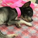Elle entre dans la clinique vétérinaire, demande à voir son chien et fait l'inimaginable (Vidéo)