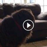 Cette adorable fillette tente d'apprendre à son chien à des gestes de Ninja (Vidéo du jour)