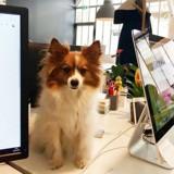 6 choses qui changent quand vous emmenez votre chien au bureau