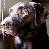 Peur des chiens : formation pour les facteurs