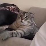 La réaction de ce chat qui regarde un documentaire animalier est hilarante ! (vidéo)