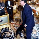 Quand le Labrador Philae fait (un peu trop) la fête aux invités de François Hollande