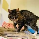 Elle retrouve sa chatte disparue pendant 20 ans, le vétérinaire lui révèle quelque chose de glaçant