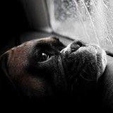 Ces 12 chiens qui attendent leurs maîtres vont vous faire pleurer !