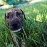Une photographe aide les chiens de refuge