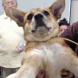 Il fait la queue pour abandonner son chien, quand les volontaires voient son visage ils sont horrifiés