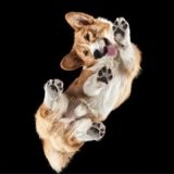 Ce photographe prend des photos d'animaux par en dessous et le résultat est bluffant !