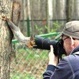 Quand les écureuils se déchaînent