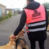 Gamelles Pleines : une association qui nourrit et soigne les chiens des personnes sans abri