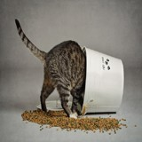 Grande Enquête Wamiz : quoi de neuf dans les gamelles de nos chats ?