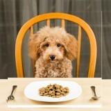 Grande Enquête Wamiz : quoi de neuf dans les gamelles de nos chiens ?