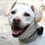 Pet Tracker invoxia : le GPS pour ne plus jamais perdre votre chien ou votre chat