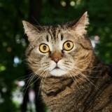 """Les perles du véto : avez-vous déjà vu un chat """"coquille d'oeuf"""" ?"""