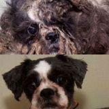 L'incroyable métamorphose d'un chien abandonné (Photos)