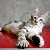 30 photos de chats pris sur le vif