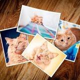 Dans cette entreprise, de mystérieuses photos de chats ont fleuri à l'accueil et personne ne sait pourquoi