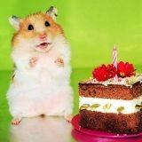 Des hamsters qui font tout comme nous ! (Photos)
