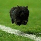 Un chat interrompt un match de rugby... et devient une star du Web !