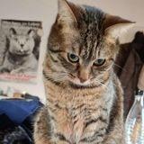 Elle cherche la salière partout : quand elle découvre où le chat l'a caché, toute la famille éclate de rire !
