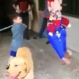 Le chien voit un enfant se battre avec une piñata, décide d'agir et fait rire tout le monde (Vidéo)