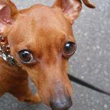 Une justice pour le chien Mambo