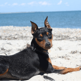 Comptez-vous partir en vacances avec votre animal ? (La question Wamiz/RMC)