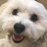 Le chien de Glenn Close a son propre compte Instagram