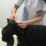 Comment appliquer une pipette antiparasitaire à son chien ?