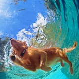 10 chiens qui s'éclatent à la piscine (Photos)