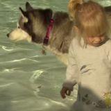 La Pool Party canine : l'idée de génie venue du Canada