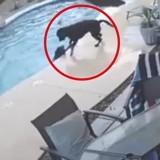Ce chien fidèle a sauté à l'eau pour sauver la vie de son meilleur ami ! (Vidéo)
