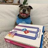 Il tend une boite à pizza à son chien : sa réaction quand il voit ce qu'elle contient n'a pas de prix
