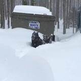 Ce Berger Allemand sauve un Pitbull pris dans la neige (vidéo)