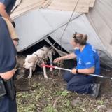 Ouragan Ida : des secouristes viennent en aide à un Pitbull et sont choqués en enlevant les débris d'un hangar