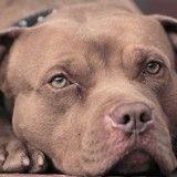 Elle abandonne sa chienne dans un refuge... cette dernière se fait euthanasier 1h plus tard