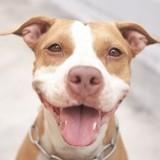 Chiens dangereux : faut-il en finir avec la loi sur les chiens catégorisés ?