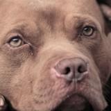 Elle conduit plus de 2000 km pour ramener un chien perdu, la réaction de sa maîtresse la laisse sans voix