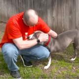 Cette chienne à qui il manque une patte a trouvé un nouveau papa comme elle !